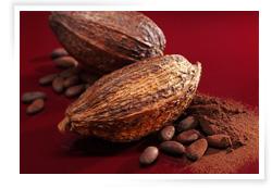 Cacao desgrasado 1%